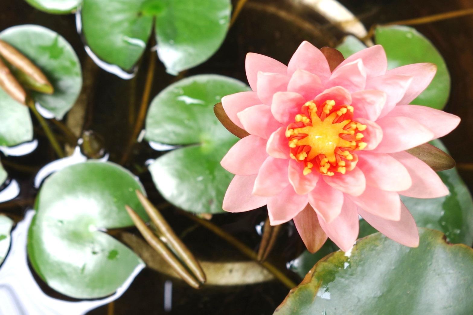 http://www.moku2house.jp/DSC09465.JPG
