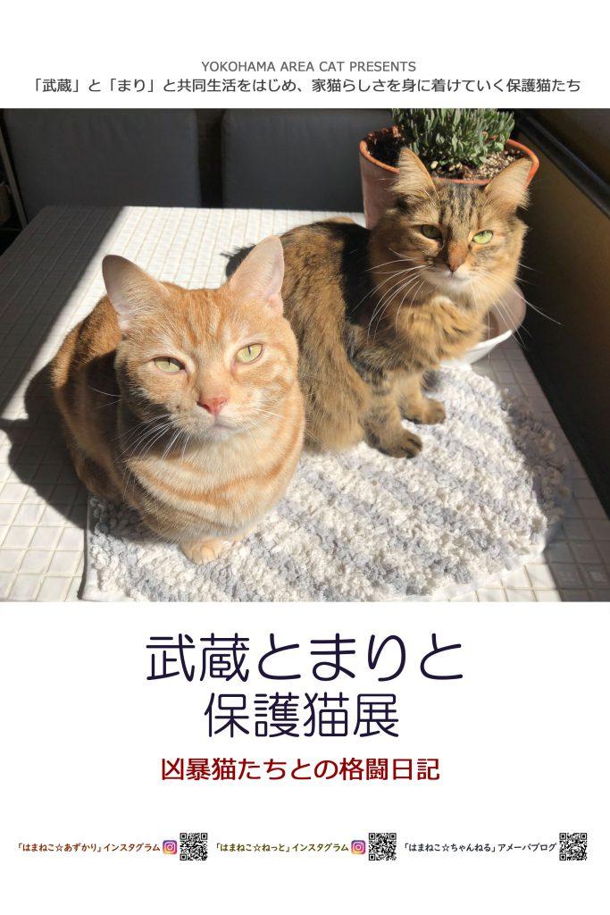 H31.2.15-16(金-土) 武蔵とまりと保護猫展